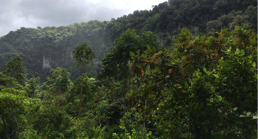 Boquete Panama - FLASHPACKBLOG - 22